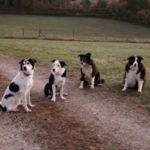 Hundebande (Ferme du Gravier)
